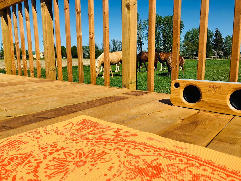 Activité spéciale – Yoga en compagnie des chevaux