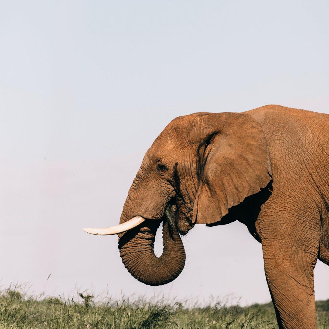 Café-rencontre – Un éléphant dans la pièce